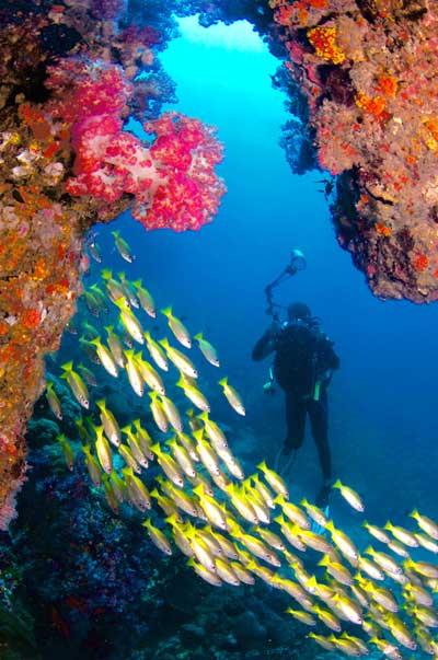 Plongeur à hin muand diaw sur le site d'Anita's Reef, îles Similan