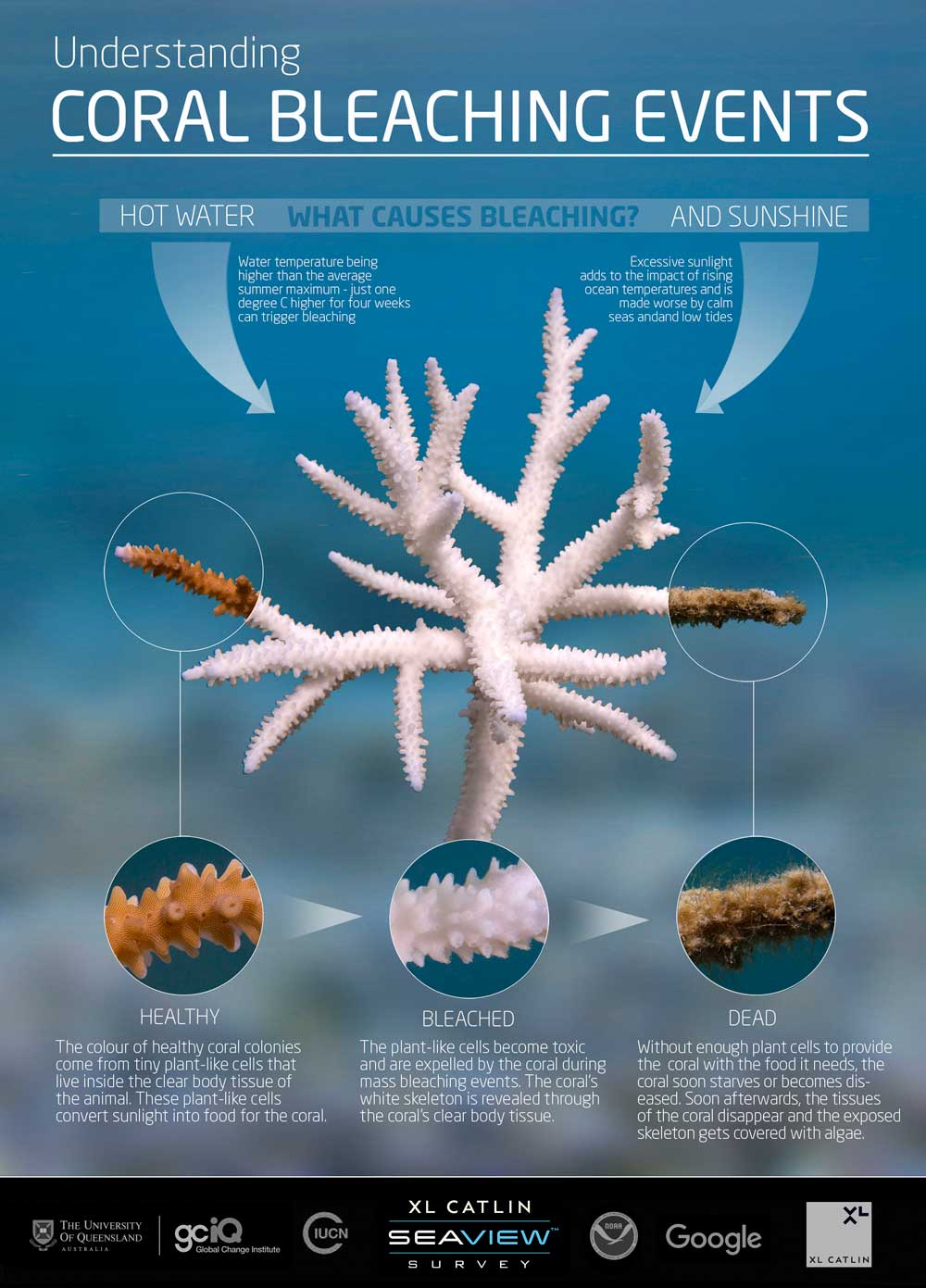 What is coral bleaching infographic