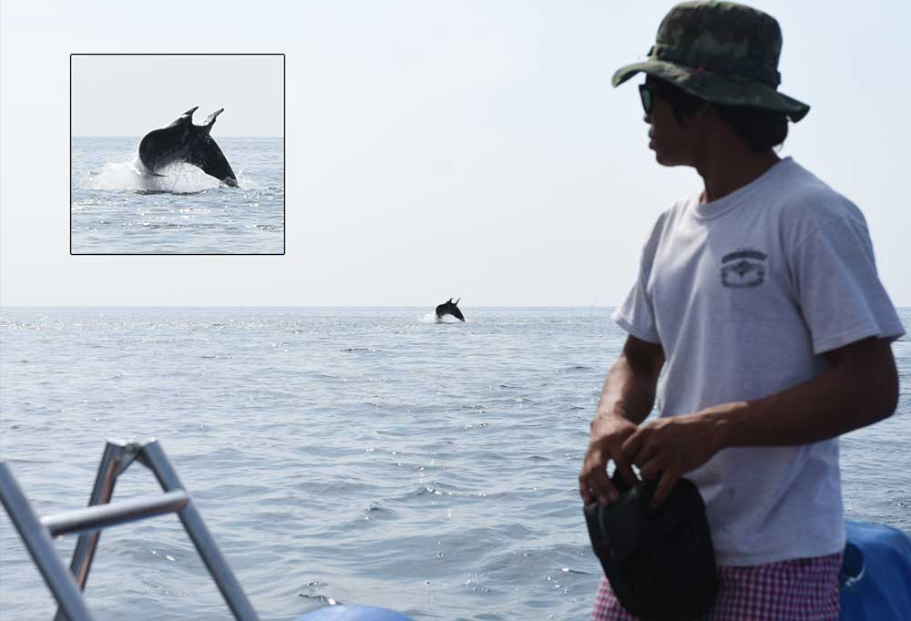 Giant Manta Ray breaching at Black Rock Dive site Myanmar